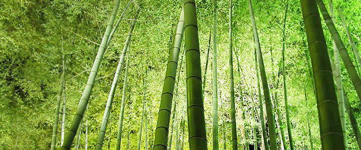 how to kill bamboo